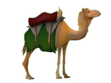 El camello despistado - un cuento ofrecido por BelenCribs