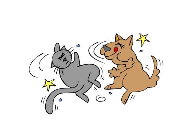 El perro el gato y el anillo mágico