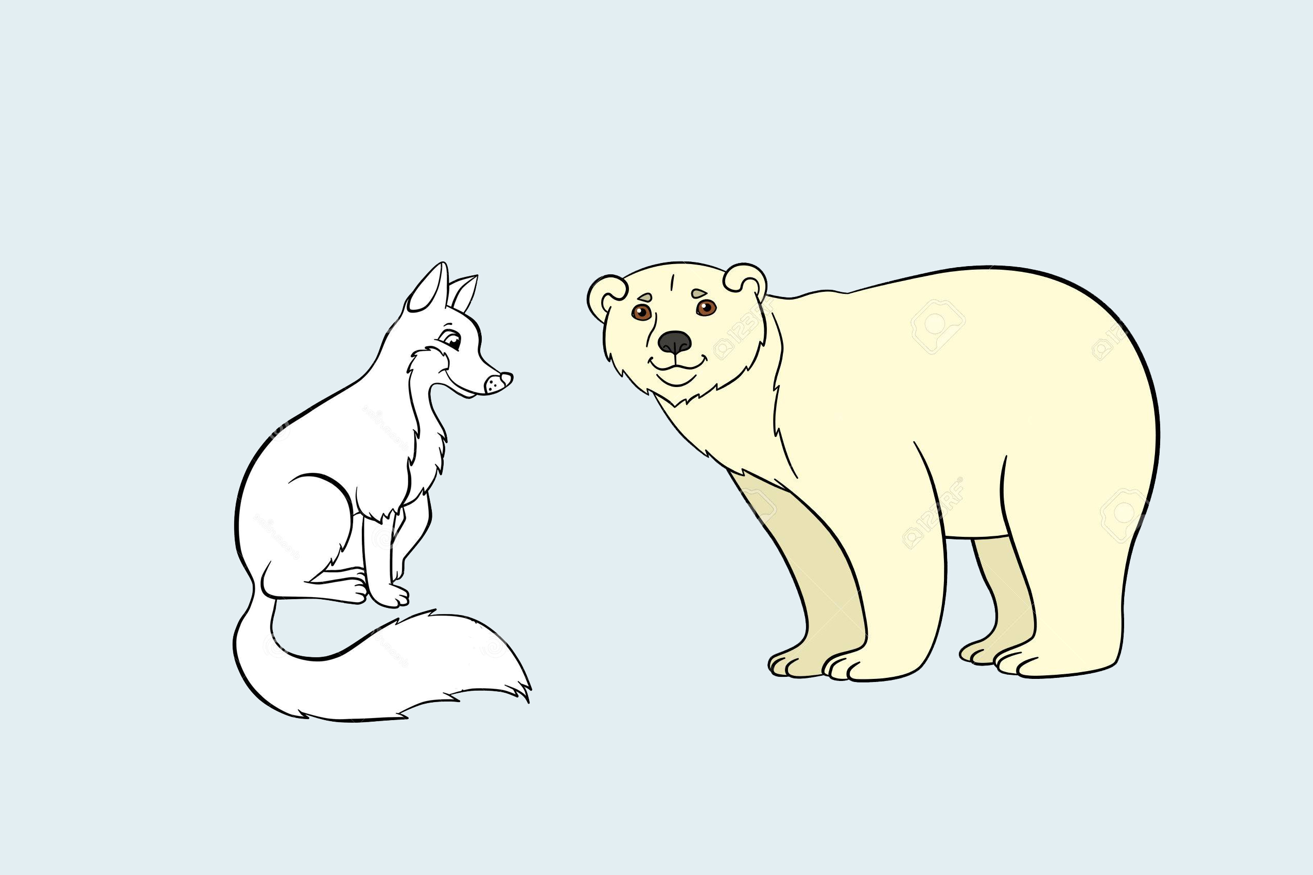 ¿Por qué los osos polares no tienen cola? Una bonita fábula del oso polar