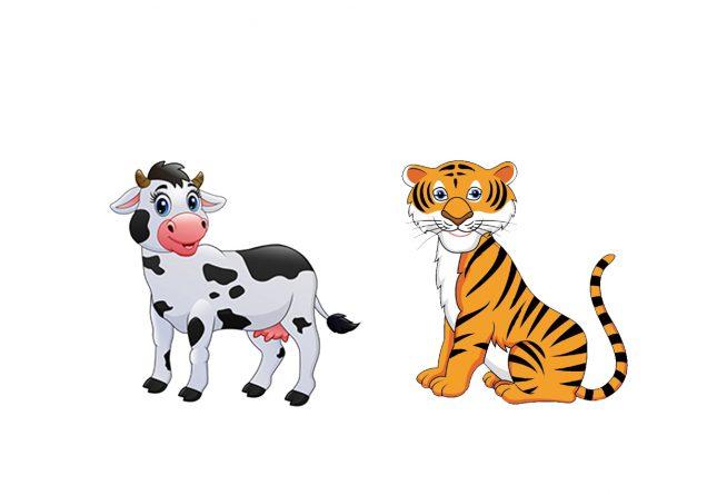 El tigre y la vaca